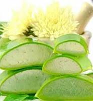 Az orvosi Aloe vera felhasználása + recept