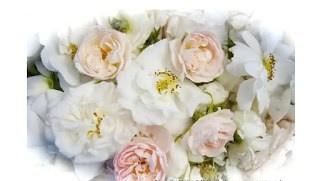Alba Rózsa használata receptekkel
