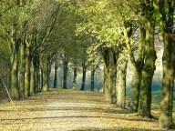 Bomenrij in de polder