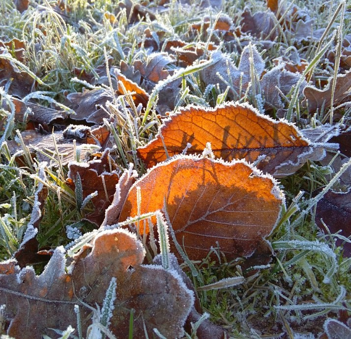 Frozen-3