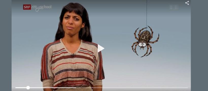 Wozu taugen Spinnen? SRF mySchool hält interessante Schulstoffe bereit.