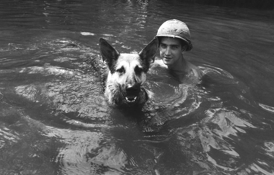Vietnam South U.S.  Forces  Dogs