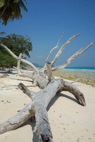 Picture of fallen tree on a beach on Havelock Island
