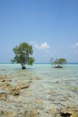 Neil Island, Andamans