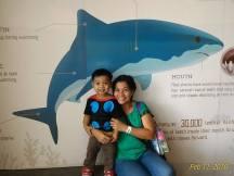 sharks have so many teeth!