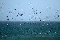 Part of the huge flock