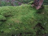 A moss covered branch