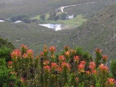 Fynbos Retreat