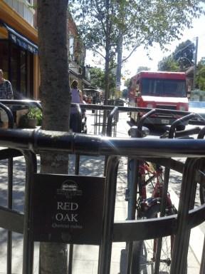 Red Oak tree label