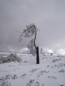 Alto da Neve