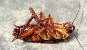 Close-Up Of Dead Cockroach On Floor