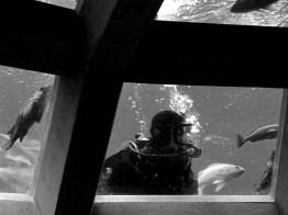seattle-aquarium-2010-083