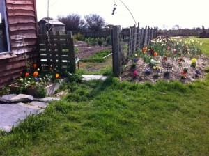 Flowers and Veg garden