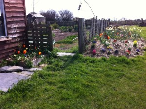 Flowers and Veg garden