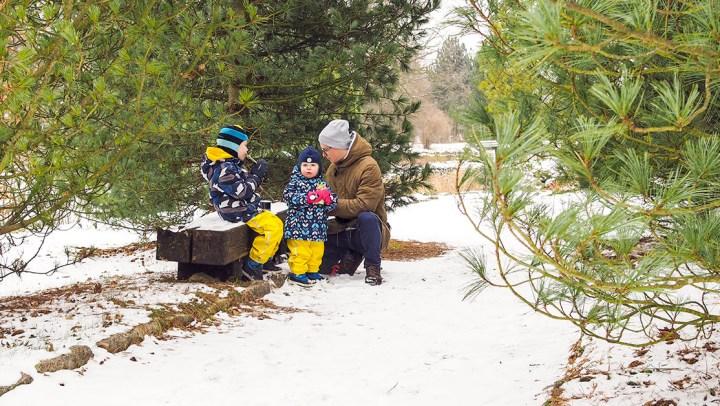 Co robić zimą w ogrodzie botanicznym?