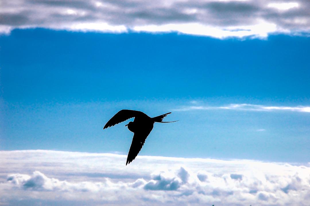 Beyond  the Galapagos