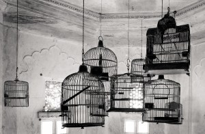Bird Cages, Udaipur, India photo
