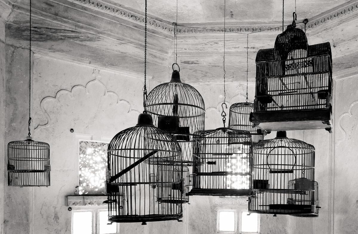 Bird Cages, Udaipur, India photo