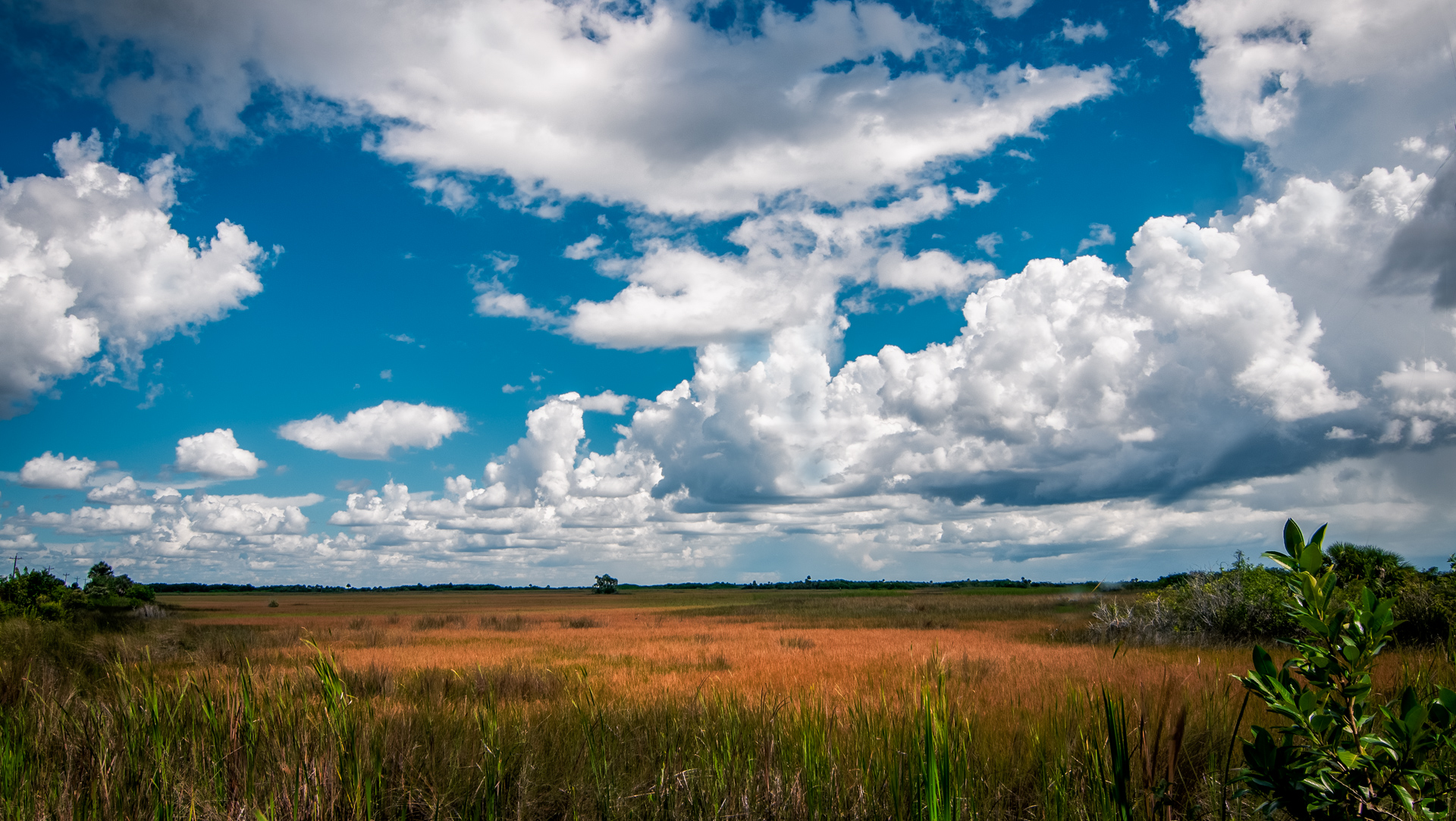 Everglades, a River of Grass