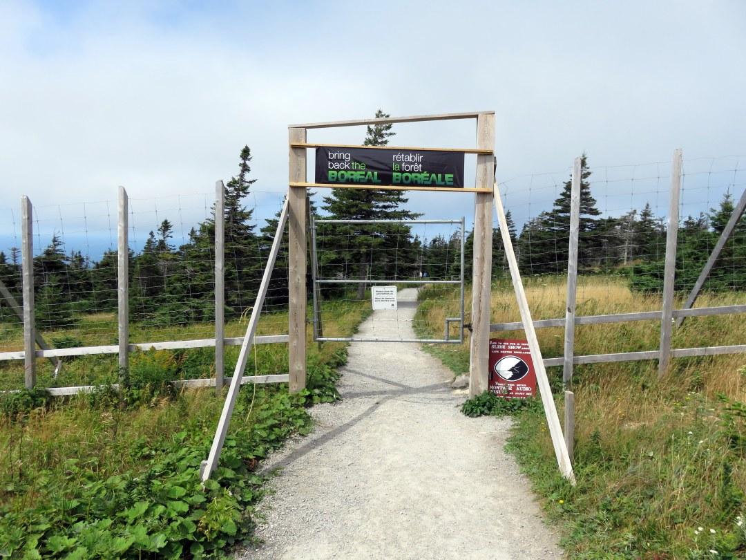 Hiking Skyline Trail 1