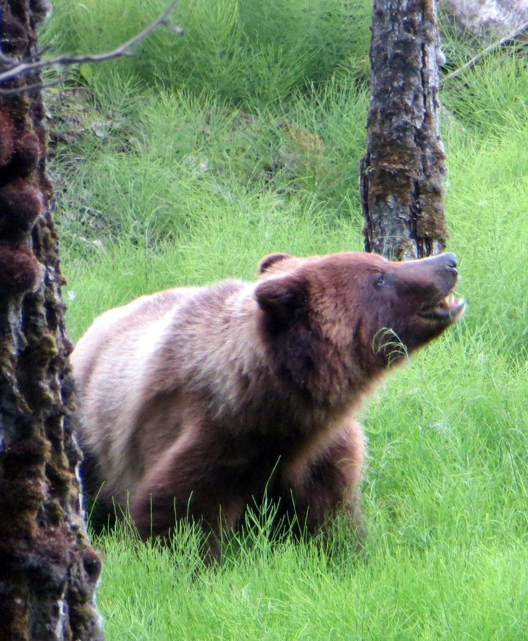 Bear 1.JPG