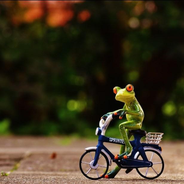 frog riding a bike