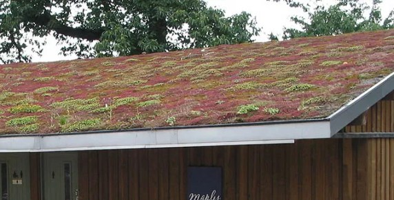 picture of a eco roof