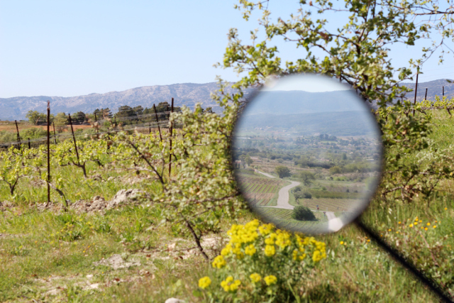Wine_Rhone_valley_travel_blog_Avignon51