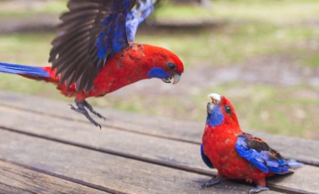 Jervis_bay_australia_new_south_wales_travel_rooftopantics (3 of 16)