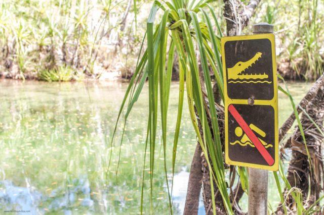 deadly_animals_northern_territory_australia_kakadu_katherine_rooftopantics_travelblog-5-of-15