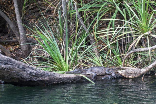deadly_animals_northern_territory_australia_kakadu_katherine_rooftopantics_travelblog-6-of-15