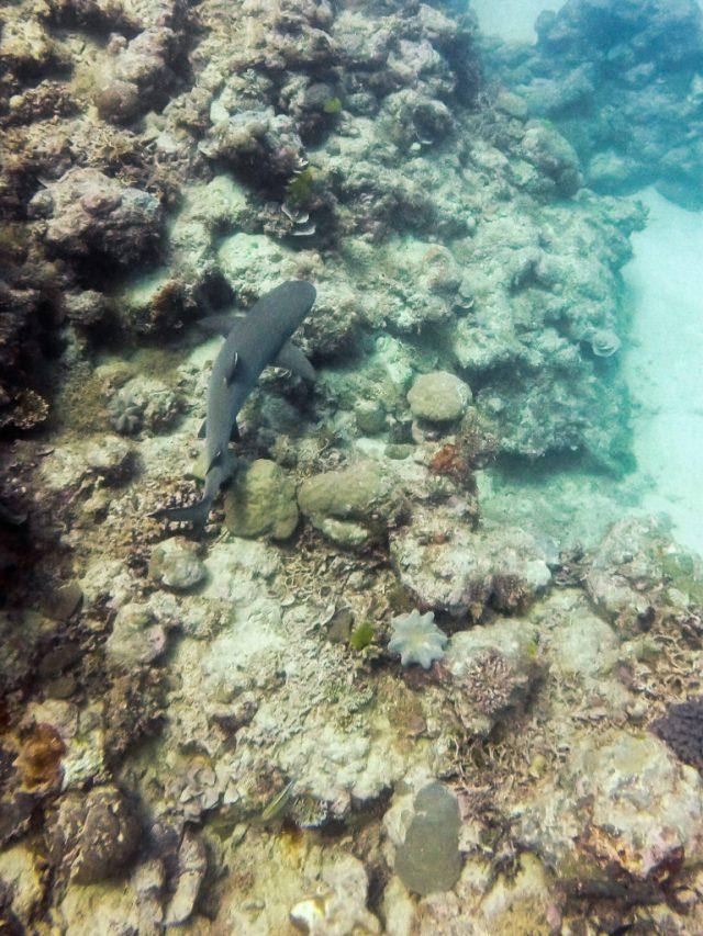 Great_barrier_reef_from_port_douglas