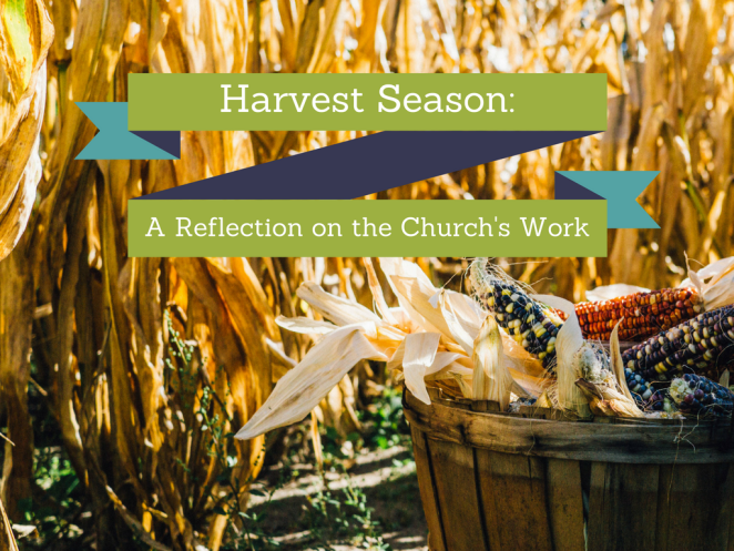 harvest-season-a-reflection-on-the-churchs-work