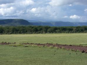 giraffe manyara-see nationalpark