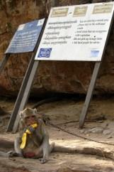 Ankunft auf dem Tempelberg. Es erwartet uns ein angeketteter Affe, der sich gerne mit Süßigkeiten füttern lässt, und die Hinweisschilder, dass das gesamte Areal großräumig vermint ist – wohl nicht erst seit dem aufgeflammten Konflikt mit Thailand, vor allem sind es Hinterlassenschaften der Roten Khmer.