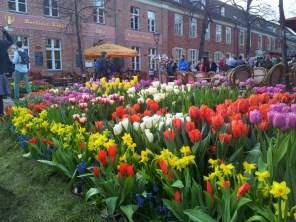 Zum Tulpenmarkt findet man allerlei Tulpen in allerlei Formen und Farben.
