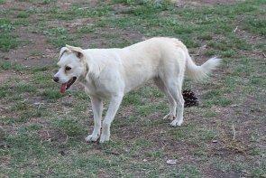 Hund Straßenhund Pompeji Hunde Ruinenstadt