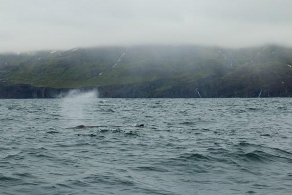 Der erste Wal den ich lebendig gesehen habe, bläst aus.