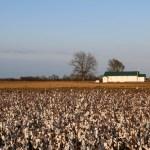 Reise-Tipps für Clarksdale und das Mississippi Blues Delta