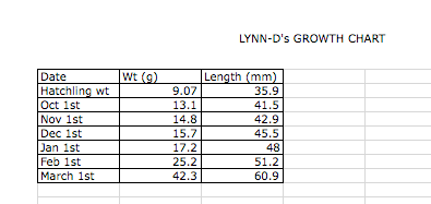 Introducing Lynn-D By The Numbers (4/5)