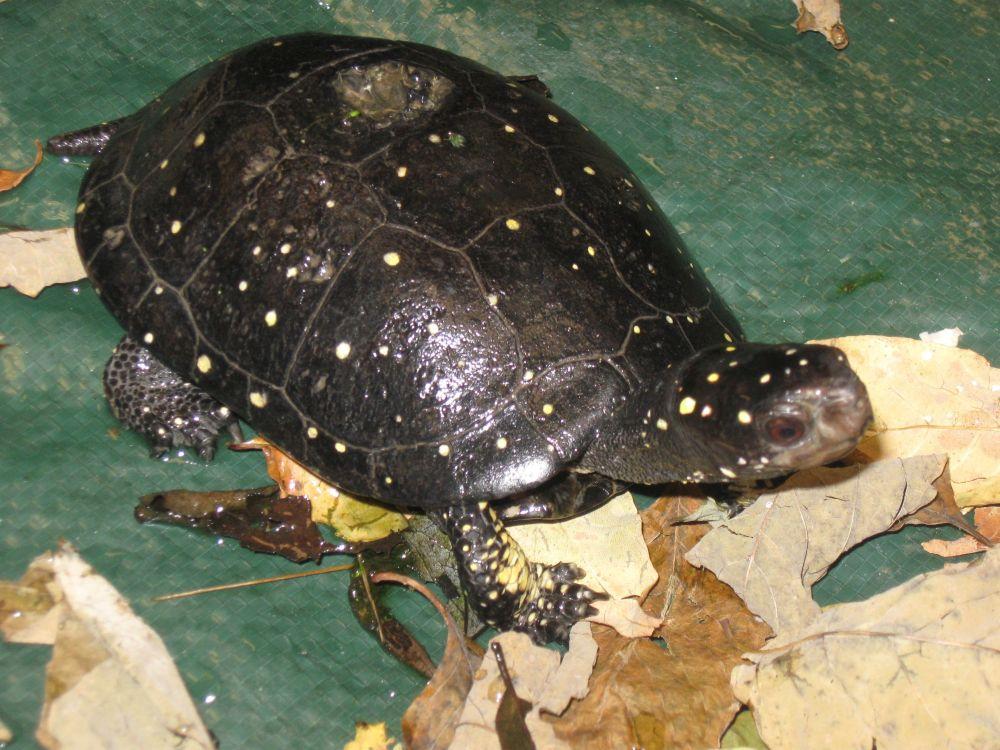 Turtle Catalog (3/3)