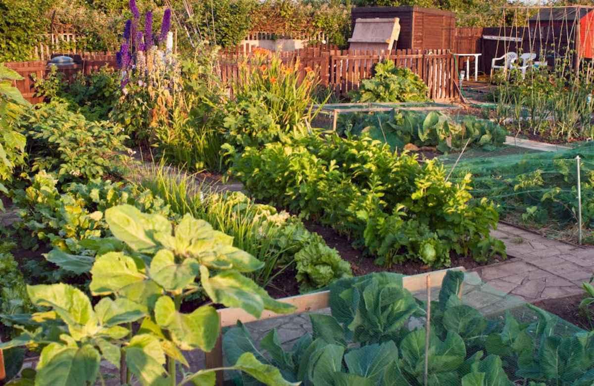 35 stunning vegetable backyard for garden ideas (16)