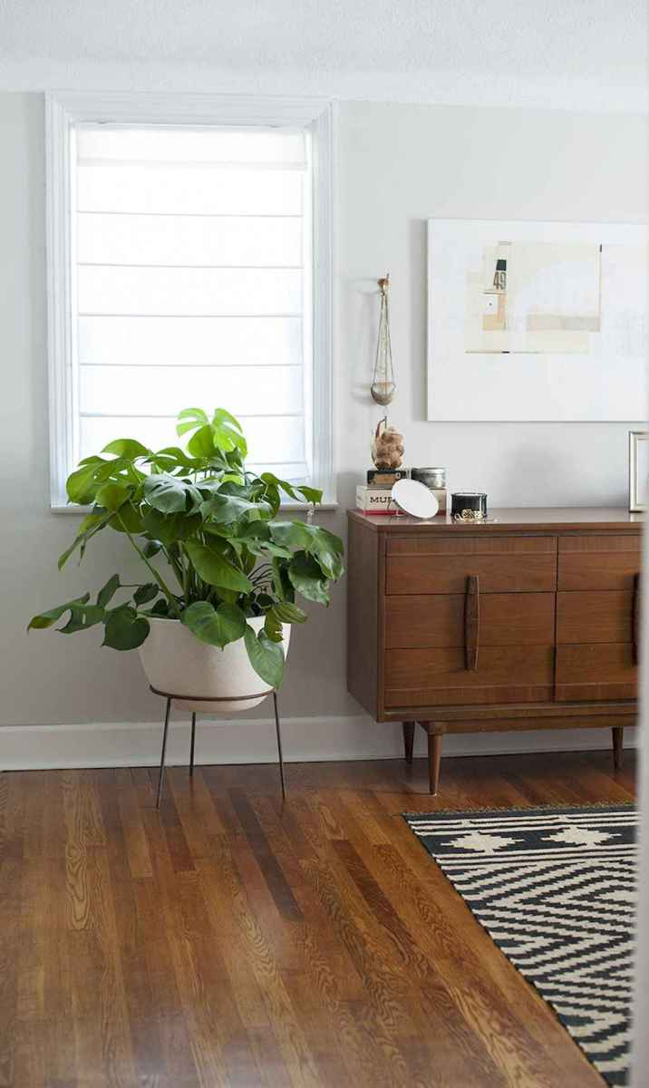 55 greeny indoor plants ideas that will purify your room's air (20)