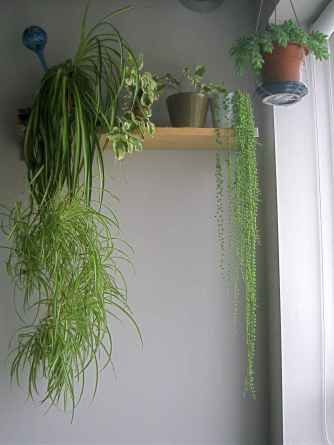 55 greeny indoor plants ideas that will purify your room's air (39)