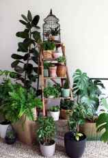 55 greeny indoor plants ideas that will purify your room's air (42)