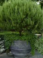 Adorable diy container herb garden design ideas (14)