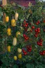 Adorable diy container herb garden design ideas (24)