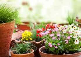 Best summer container garden ideas 63