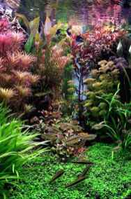 Relaxing aquascaping ideas for inspiration 17