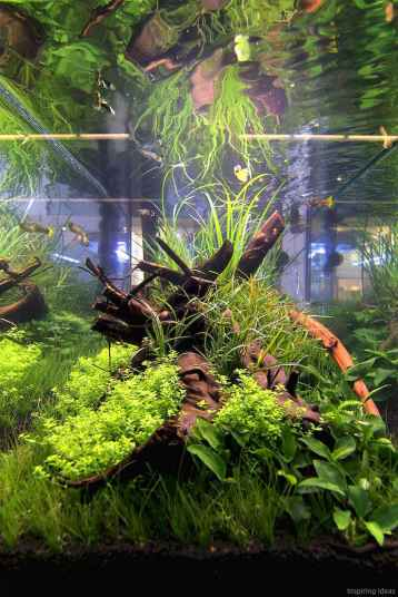 Relaxing aquascaping ideas for inspiration 18